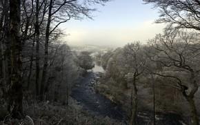 fiume, foresta, gelo, paesaggio