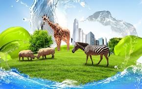 жираф, носороги, зебра, здания, креатив, вода, трава, газон