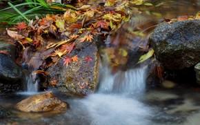водопад, река, камни, листья, осень