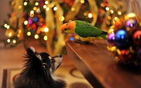 cane, Pappagalli, vacanza, casa, Capodanno