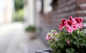 fiori, strada, sfondo
