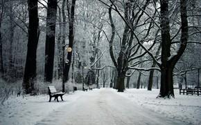 парк, зима, пейзаж