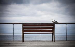 uccello, panchina, cielo