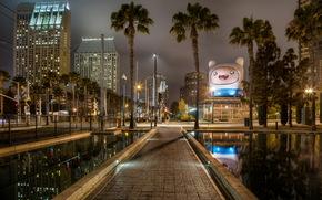 США, Сан-Диего, Калифорния, Пальмы, Тротуар, Ночь, Города