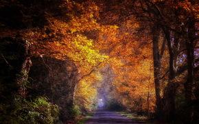 лес, дорога, природа, пейзаж