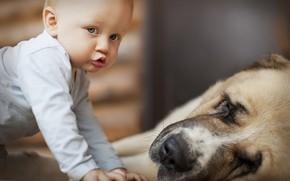 ребёнок, мальчик, собака