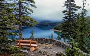 lago, alberi, Abete, panchina