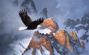 живопись, зима, горы, орёл, белоголовый орел, полёт, облака, снег