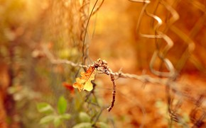 забор, лист, природа, макро