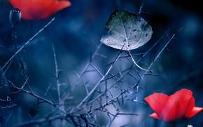 лист, цветок, природа