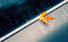 макро, осень, лист, жёлтый, капли, машина