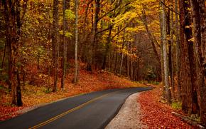lascia, alberi, foresta, parco, autunno, camminare, hdr, natura, fogliame, alberi, foresta, parco, autunno, passeggiare, natura, Strada, sentiero