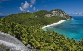 estate, sole, palma, oceano, riposo, esotiche, il piacere, natura, seychelles, Isola del Nord Piante, acqua, mare, paesaggi, costa, montagna, yacht, spiaggia, bungalow, pietre, navigare, Rocks, vista