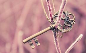 настроения, ключ, розовый. красивый, ветка, зима, фон, обои