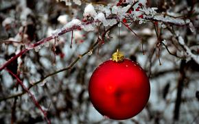 шар, красный, шарик, елочная, игрушка, ветка, лед, зима, Новый Год, Новый год