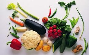 vegetables, food, radish, cucumber, potatoes, root, mushrooms, carrots, eggplant, peas, pepper, pepper, tomato, cabbage