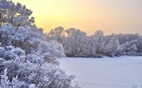 natura, alberi, neve, inverno, campo, tramonto, paesaggio