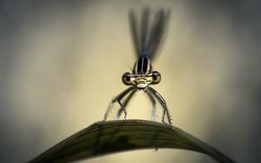 макро, лист, стрекоза, насекомое