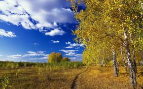 estate, cielo, campo, traccia, alberi
