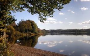 autunno, foresta, lago, alberi, cielo, nuvole