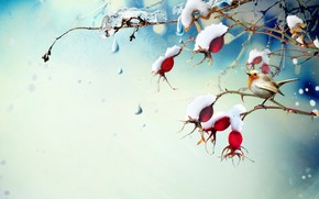birdie, branch, ice, snow, Berries
