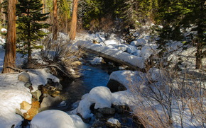 forest, creek, snow, nature