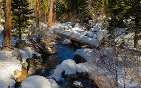 foresta, torrente, neve, natura