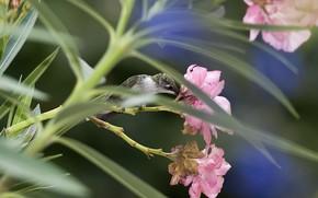цветы, фокус, птица, колибри