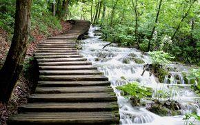 acqua, ruscello, cascata, traccia, Di legno, verdura