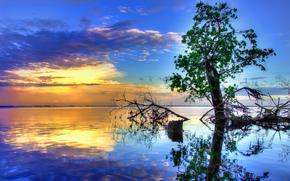 река, дерево, вода, отражение, закат