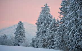 evening, Winter, snow, Hills, needles, ate, Trees