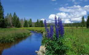 field, forest, flow, Flowers, nature, Czech Republic, modrava