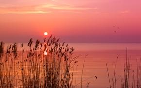 mattina, lago, Foschia, natura
