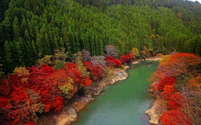 arashiyama, kyoto, japan, oi river, Japan, river, forest, Trees