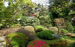 Giardini, Francia, giapponese, Albert Kahn, cespuglio, natura