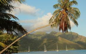 Тропики, Французская Полинезия, Пальмы, Деревья