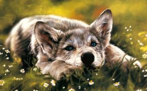 loup, chien, angoisse, est, voir