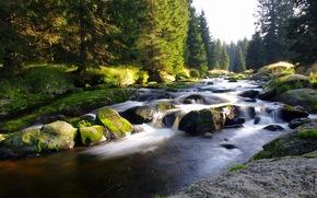 mountain river, forest, nature, Czech Republic, Bohemia, Sumava, narodni park