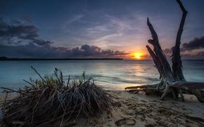 песчанный берег, закат, коряга, море