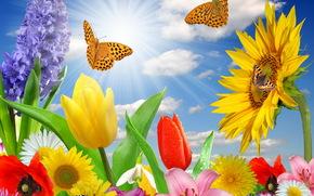 Подсолнухи, Бабочки, Тюльпаны, Лучи света, Цветы