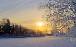 Sweden, Winter, snow, meadow, Trees, Morning, sun, Sunrise