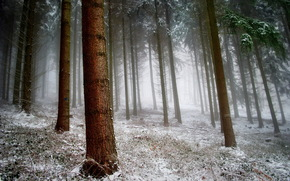 forest, snow, nature