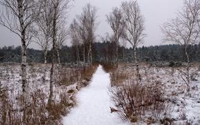 inverno, alberi, traccia, cespuglio, paesaggio