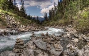 Wald, Fluss, Steine, Landschaft
