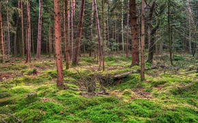 forest, moss, nature, landscape