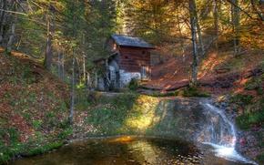 foresta, torrente, piccolo fiume, mulino ad acqua, natura, paesaggio