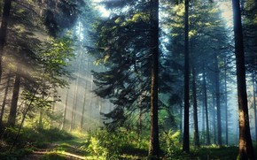 nature, forest, trail, light, rays, Trees
