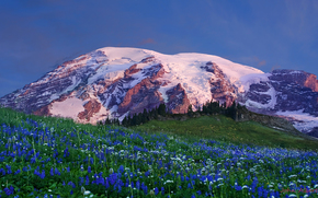 Mountains, meadow, Flowers, snow, top
