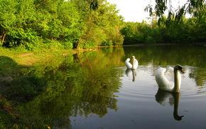 Parcs, Cygnes, lac, Nature