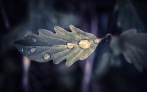 лист, капли, макро